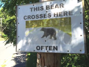 this bear crosses here, often 2