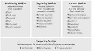 ecosystem chart, millenium assessment
